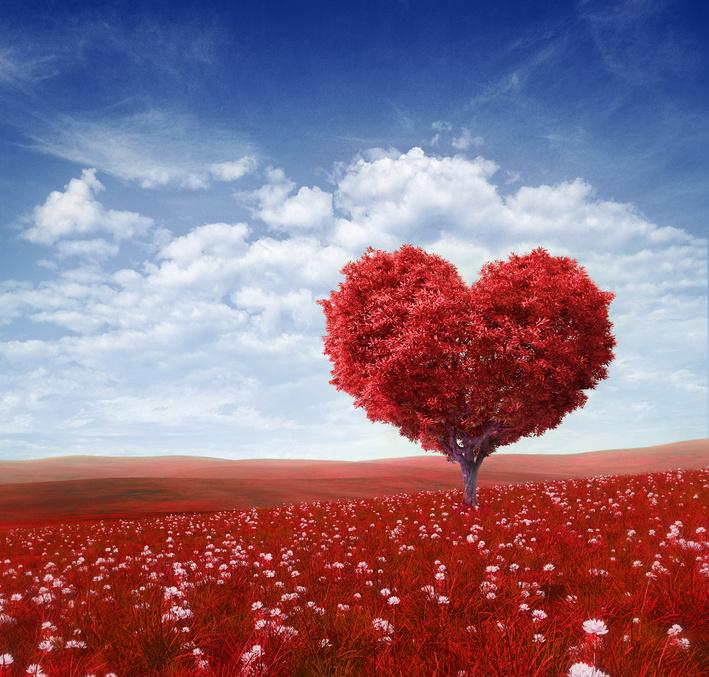 Weg zum Herzen