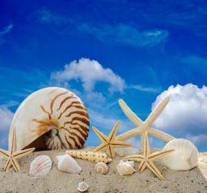Fraktale Mollusken