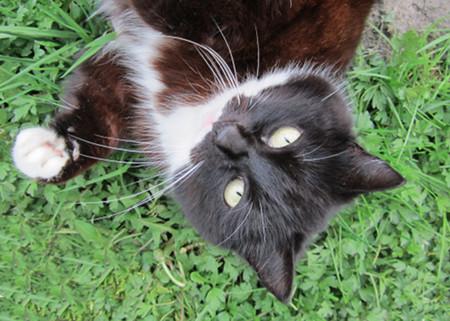 Traumdeutung Katze