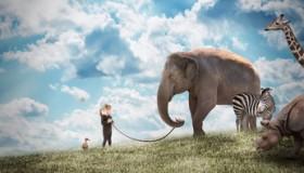Traumdeutung Tiere retten