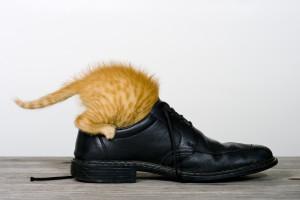 Katze findet was im Schuh
