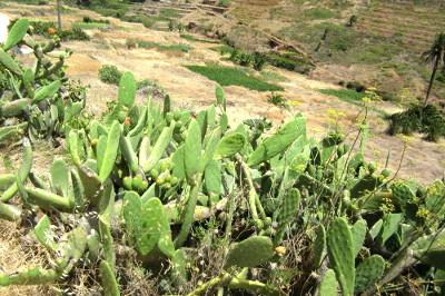 Traumdeutung Kaktus