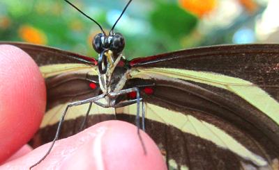 Traumdeutung Insekt