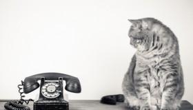 Katze mit Telefon