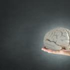 Unser Gehirn